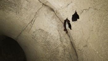 Mali podkovnjak in navadni netopir