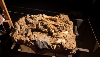 Ostanki kosti jamskega medveda